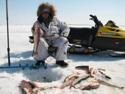 Охота на полярного волка в якутии