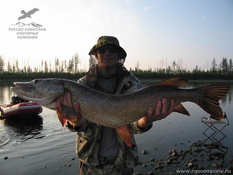 рыбалка на щуку в мае в красноярске