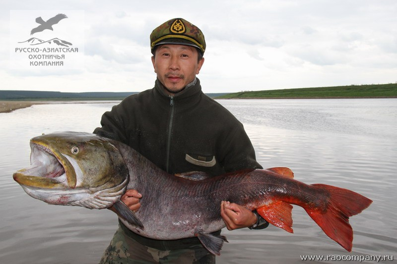 рыбалка на северных реках якутии