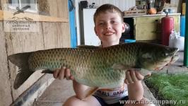 Рыбалка на толстолобика в Саратовской области