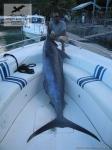 Рыбалка на голубого марлина (Blue Marlin) на Сейшелах