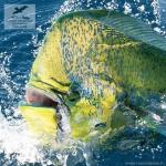 Рыбалка на дорадо в Коста-Рике
