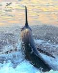 Рыбалка на черного марлина в Коста-Рике