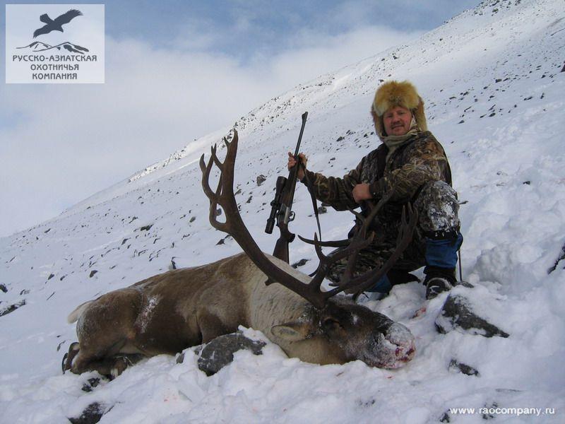 ловля северного оленя