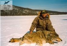 Охота на волка в Эвенкии