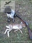 Охота с русским спаниелем на уток во Владимирской области