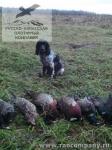 Охота с русским спаниелем на фазана во Владимирской области