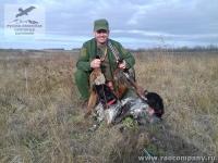 Охота на фазана с бретонскими эпаньолями