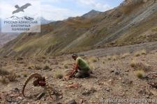 Охота в Киргизии на козерога
