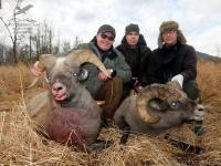 Охота на снежного барана на Камчатке