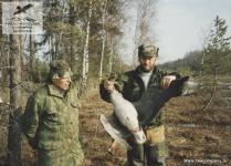 Охота на гусей в Ленинградской области