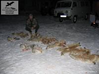 Охота на лис в Саратовской области
