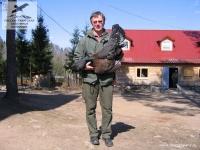Охота на глухаря в Новгородской области