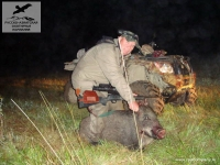 Охота на кабана в Подмосковье