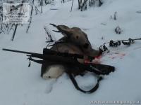 Охота на косулю на Алтае