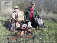 Охота на фазана с подружейными собаками