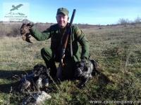 Охота на вальдшнепа в Крыму с бретонскими эпаньолями