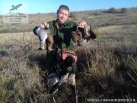 Охота на птицу в Крыму с бретонскими эпаньолями