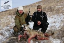 Охота на волка в Монголии