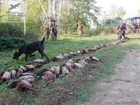 Охота на фазана в Венгрии