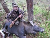 Загонная охота на лося в Новгородской области