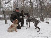 Охота на фазана в Ростовской области с подружейными собаками