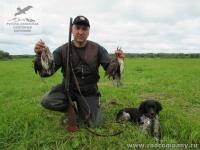 Охота на дупеля в Нижегородской области с бретонским эпаньолем