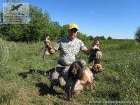 Охота с подружейными собаками