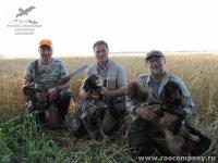 Охота на перепелку с подружейными собаками в Орловской области