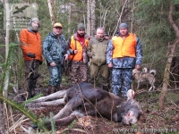Охота на лося в Новгородской области