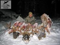 Охота на лосей в Ямало-Ненецком АО