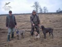 Натаска подружейных собак в Вологодской области