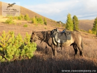 Лошадь на Алтае