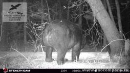 Медведь в Хабаровском крае