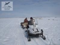Снегоход с нартами на Камчатке